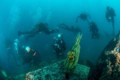 Podmorsko Hodocasce - Foto Ranko Frka-8153
